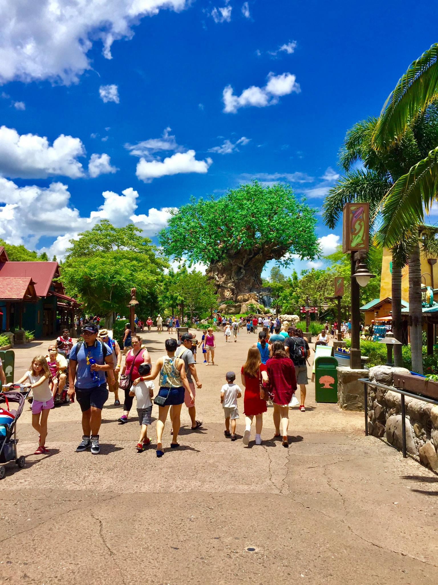 Disneys Animal Kingdom Theme Park | Tree of Life